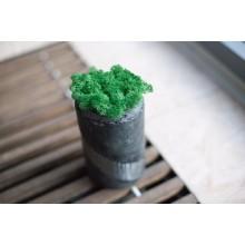 Кашпо со стабилизированным мхом цилиндр из бетона + металл Mirchik (Графитовый) NEW